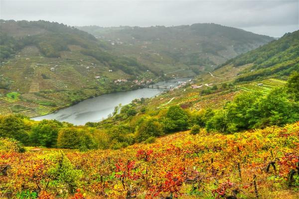 Ribeira Sacra vinos
